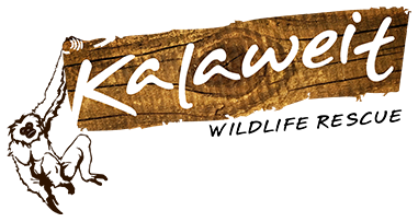KALAWEIT WILDLIFE RESCUE