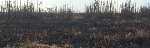 Kebakaran Hutan Lahan Gambut  yang Belum Usai